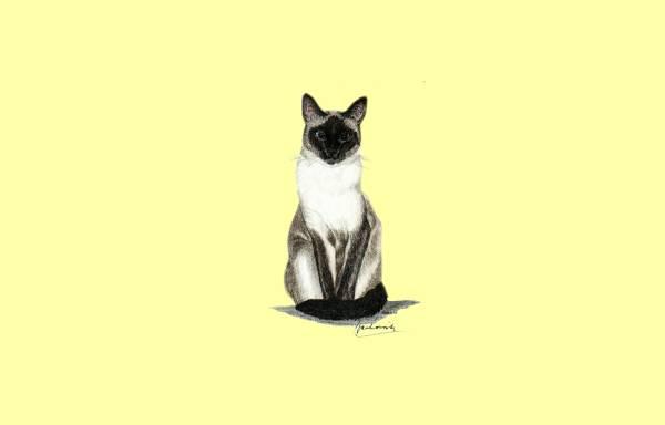 Vorschau von www.lasjoyasthai-siamcats.de, Las Joyas