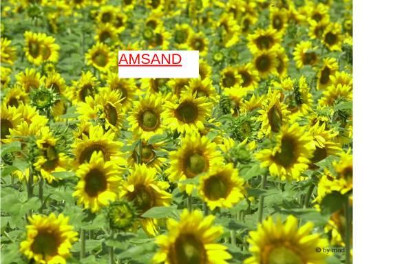 Vorschau von www.amsand.net, Erwerbsloseninitiative