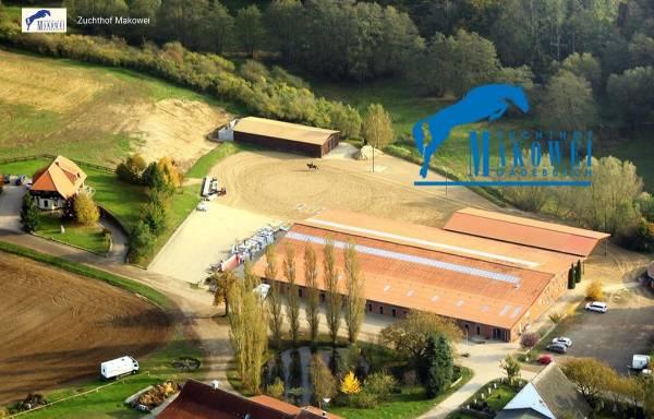 Vorschau von www.zuchthof-makowei.de, Pferde-Zuchthof Makowei