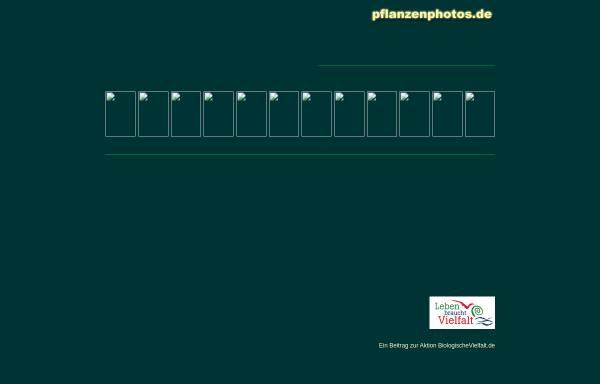 Vorschau von www.pflanzenphotos.de, Pflanzendatenbank mit Photos der Gefäßpflanzen Deutschlands und der Alpen