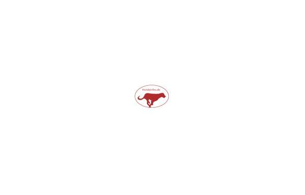 Vorschau von www.hundeinfos.de, Hundeinfos.de