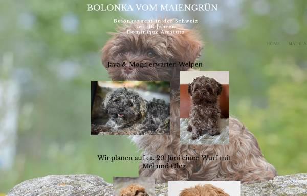 Vorschau von bolonka.ch, Kimy