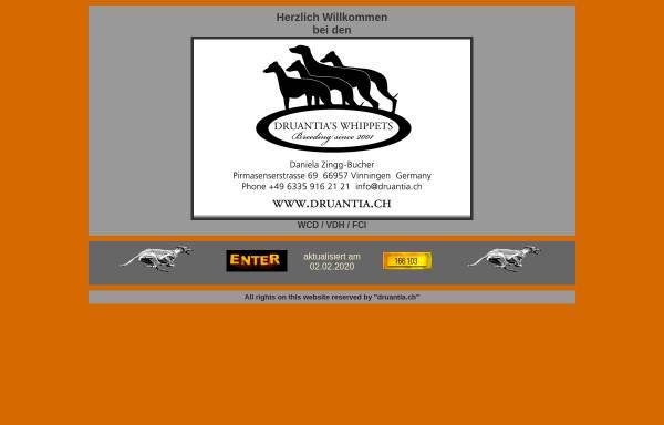 Vorschau von www.druantia.ch, Druantias Whippets