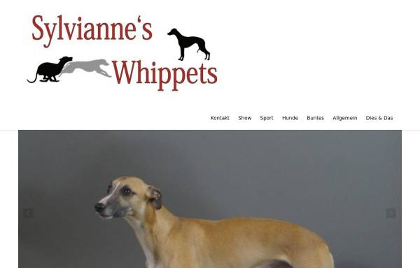 Vorschau von www.sylviannes-whippets.de, Sylvianne's