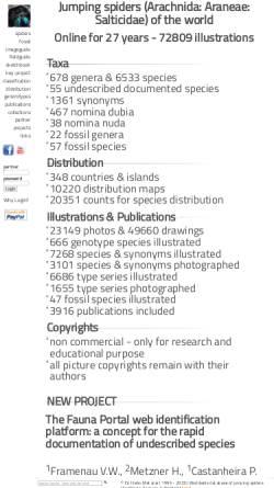 Vorschau der mobilen Webseite www.springspinnen.de, Arachnida - Araneae - Salticidae