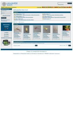 Vorschau der mobilen Webseite www.bulbophyllum.at, Bulbophyllum von A bis Z