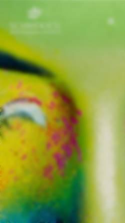 Vorschau der mobilen Webseite www.schmekies.de, Medien und Druck Schmekies