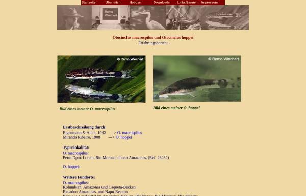 Vorschau von www.remowiechert.de, remowiechert.de