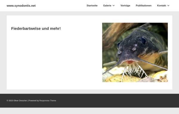 Vorschau von synodontis.net, synodontis.net