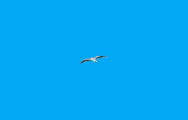 Vorschau von www.borkum-weinrich.de, Ferienwohnungen Weinrich