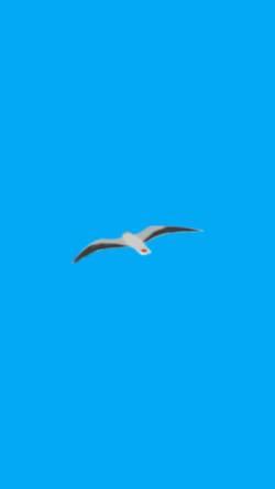 Vorschau der mobilen Webseite www.borkum-weinrich.de, Ferienwohnungen Weinrich