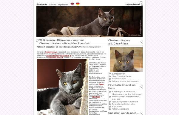 Vorschau von www.casa-prima.com, Chartreux Katzen von Casa-Prima.com