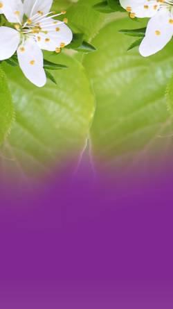 Vorschau der mobilen Webseite sayam-massage-freiburg.de, Sayam Thai Massage