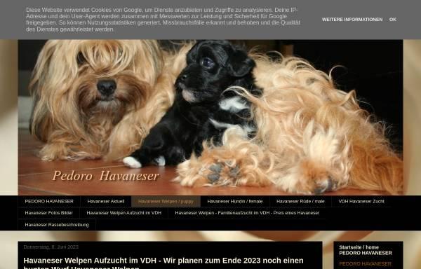 Vorschau von www.havaneser-welpen.blogspot.com, Pedoro